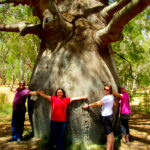 Roma's Biggest Bottle Tree outback queensland