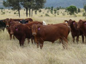 cattle stock route farm life country outback queensland
