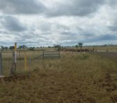 stock route cattle country outback queensland
