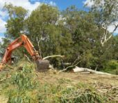 Land clearing for construction